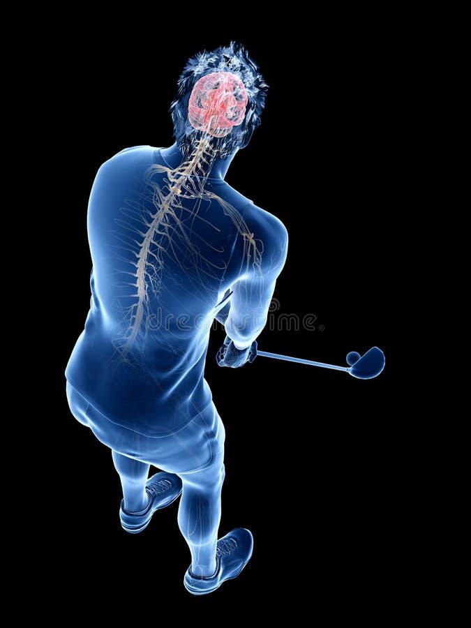 El sistema nervioso de un jugador de golf ilustración del vector