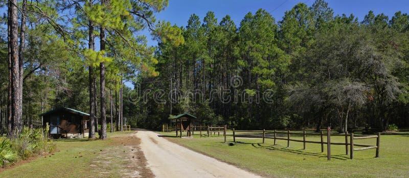 El sitio de la comida campestre en el parque y el bosque de estado de Talquin del lago con los árboles de pino gloriosos altos en fotos de archivo