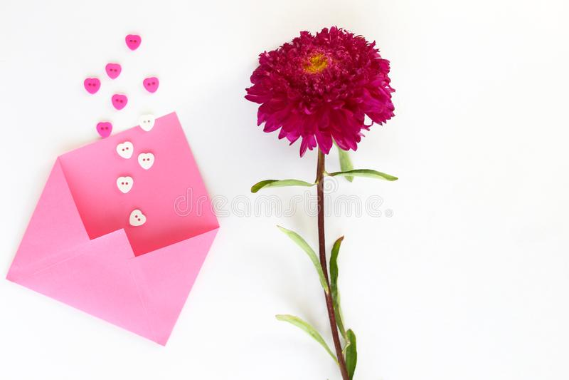 El sobre rosado para las letras con los botón-corazones y el aster de Borgoña en blanco aislaron el fondo foto de archivo
