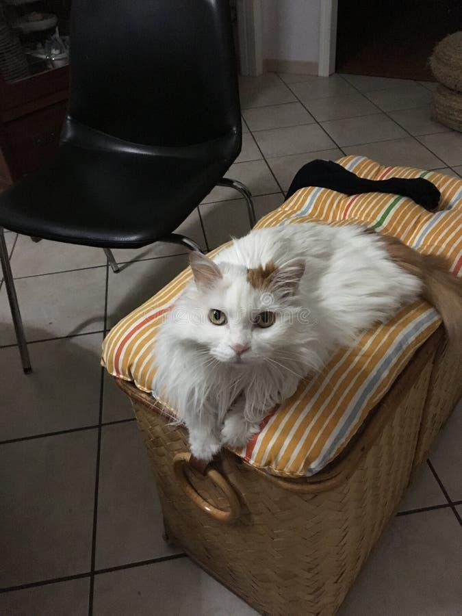 El sofá del gato fotografía de archivo libre de regalías