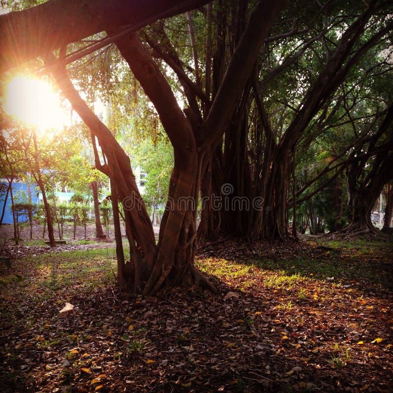 El sol foto de archivo libre de regalías