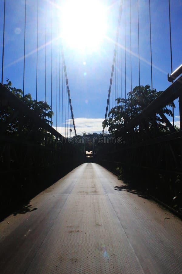 El sol arriba para arriba en el cielo, en el medio de los cables de un puente grande del metal con los árboles fotografía de archivo