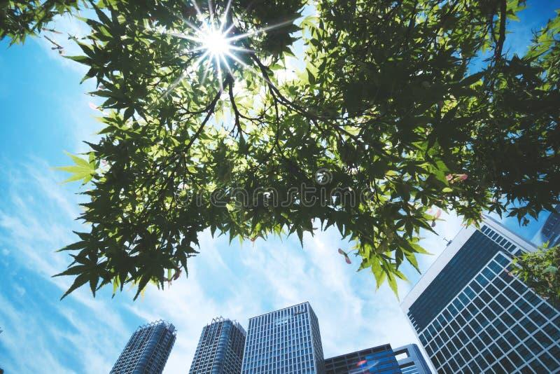 El sol brilla a través de las hojas verdes fotos de archivo libres de regalías
