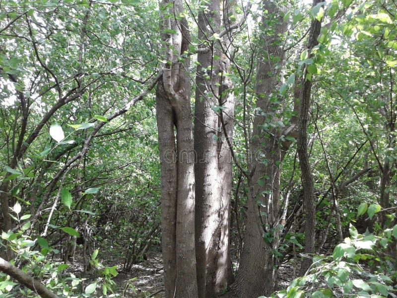 El sol brilla a través de los árboles Día asoleado Verano El bosque salvaje Multi-provino el árbol imagen de archivo