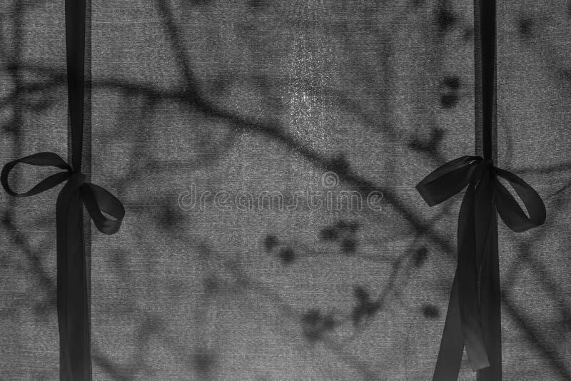 El sol de la mañana brilla a través de la cortina Reflexión de árboles fuera de la ventana El tanque de la botella fotografía de archivo libre de regalías