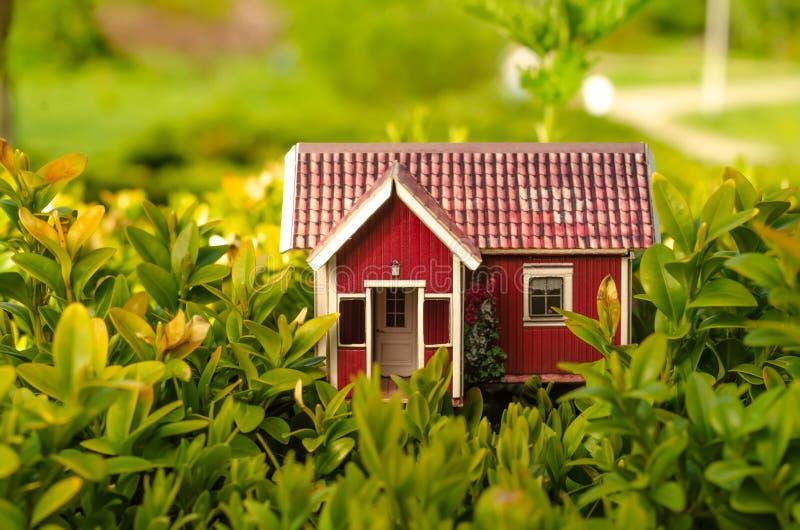 El sol de la pequeña casa sale planta de la naturaleza verde imágenes de archivo libres de regalías