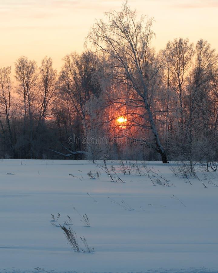 El sol de oro sube sobre el campo del invierno fotografía de archivo libre de regalías