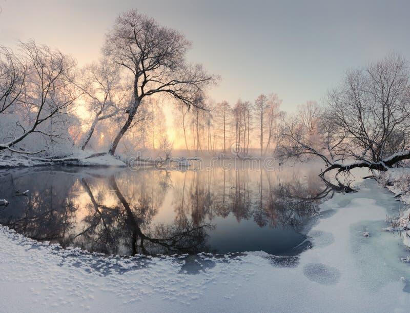 El sol del invierno ilumina árboles escarchados por la mañana fotografía de archivo libre de regalías