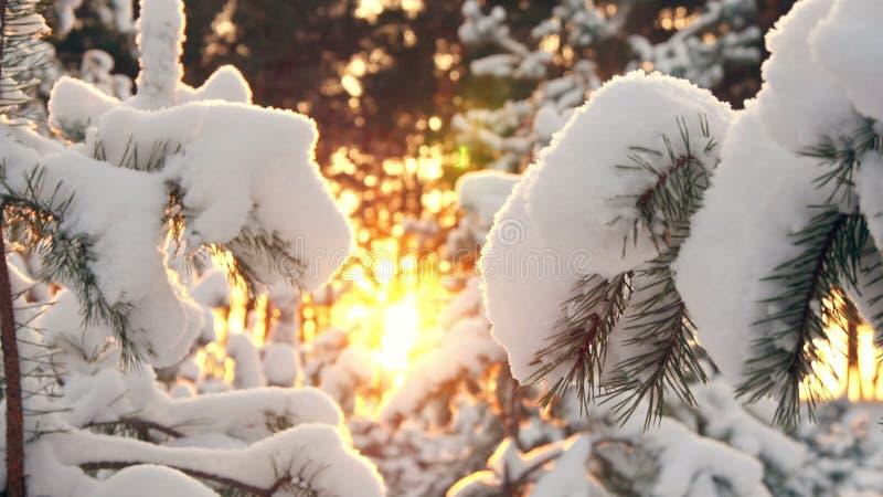 El sol del invierno se rompe a través de las ramas nevadas del abeto fotos de archivo