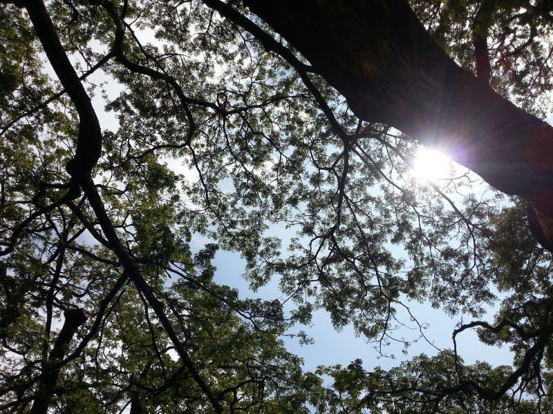 El sol en el parque está bajo paso uno de los árboles imagen de archivo