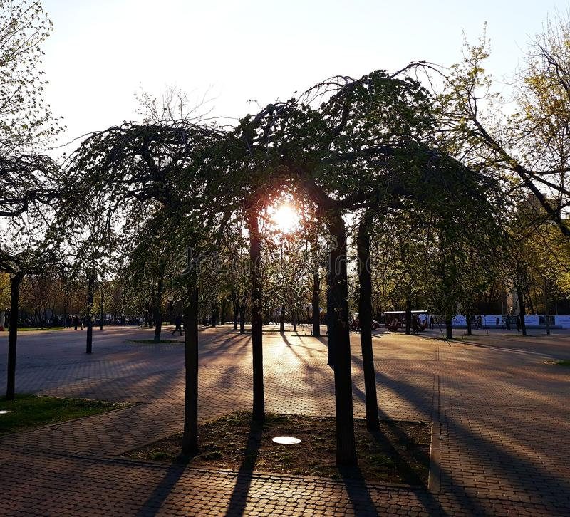 El sol poniente brilla a través del follaje de los árboles en el parque fotos de archivo libres de regalías