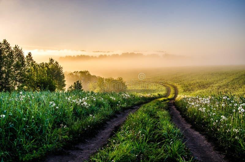 El sol se levanta sobre las nubes del mar y del oro bosque que oculta en la niebla Camino de bosque fotos de archivo libres de regalías