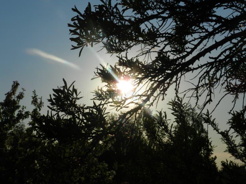 El sol a través de las ramas de un árbol imagen de archivo