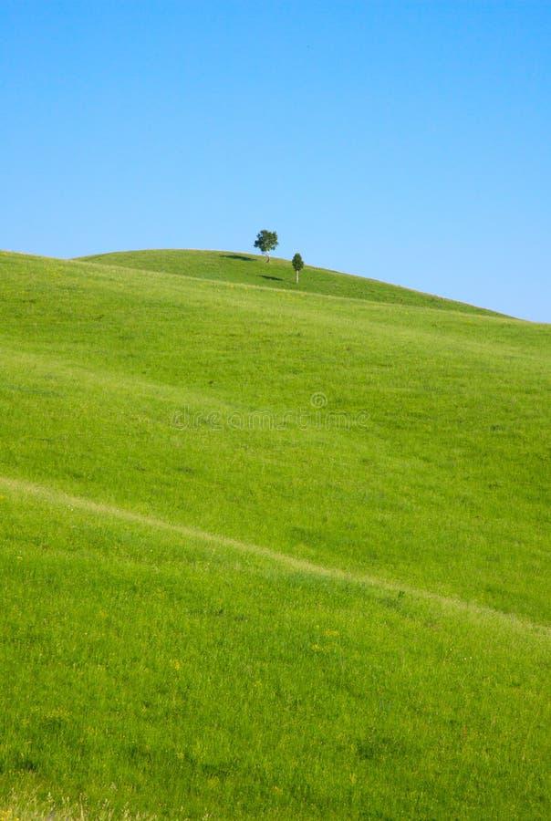 El solo árbol se coloca en la colina fotografía de archivo libre de regalías