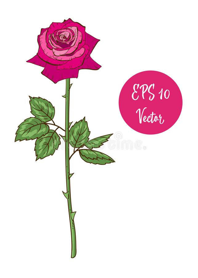 El solo ejemplo del vector de la flor de la rosa del rosa, tarjeta del día de San Valentín hermosa subió en el tronco largo aisla stock de ilustración