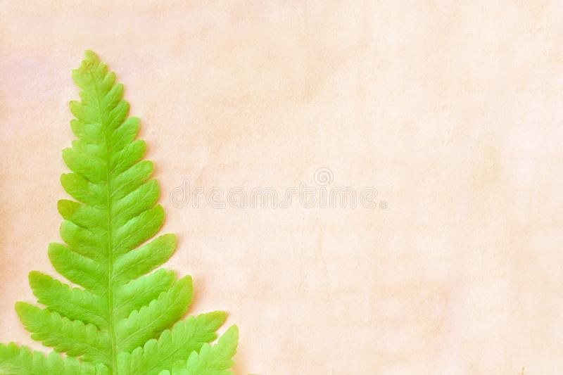 El solo helecho verde colorido se va en la vieja textura marrón en blanco del papel del grunge para el fondo, espacio de la copia imagen de archivo libre de regalías