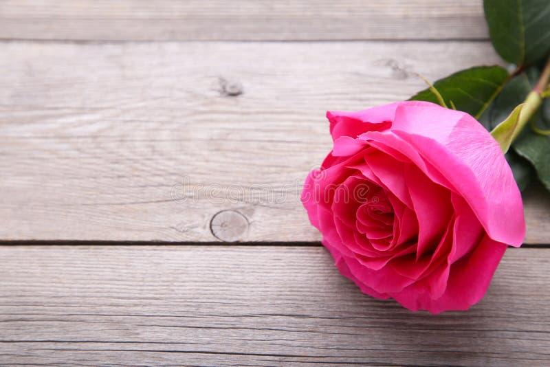 El solo rosa hermoso subió en fondo de madera gris fotos de archivo libres de regalías