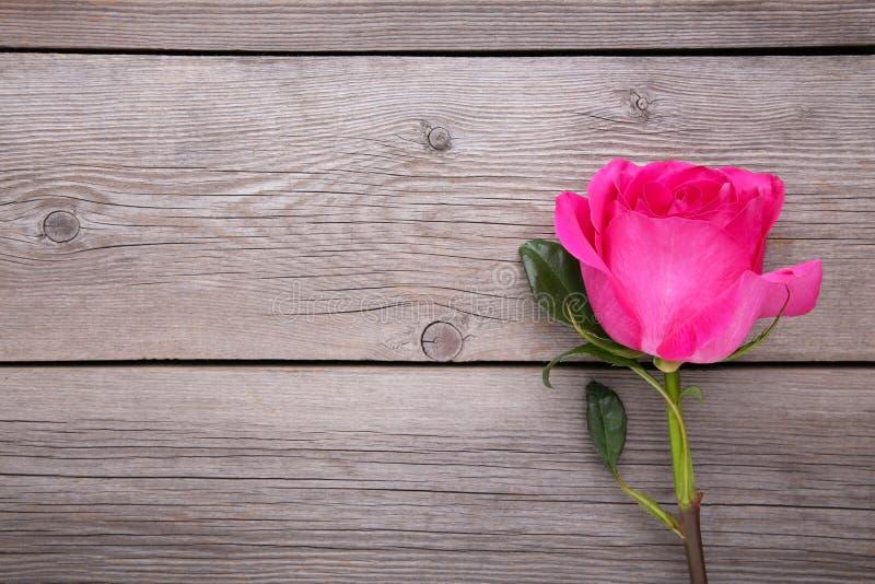 El solo rosa hermoso subió en fondo de madera gris fotos de archivo