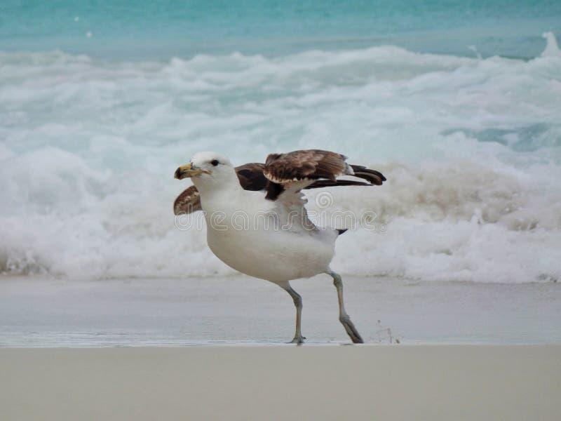 El soporte en la arena, Prainhas de la gaviota hace la playa de Pontal, Arraial hace Cabo imagen de archivo