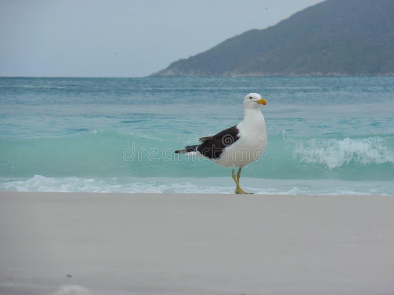El soporte en la arena, Prainhas de la gaviota hace la playa de Pontal, Arraial hace Cabo imágenes de archivo libres de regalías