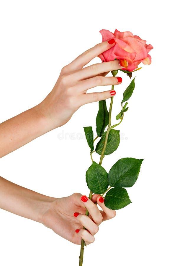El sostenerse femenino de las manos subió imagen de archivo