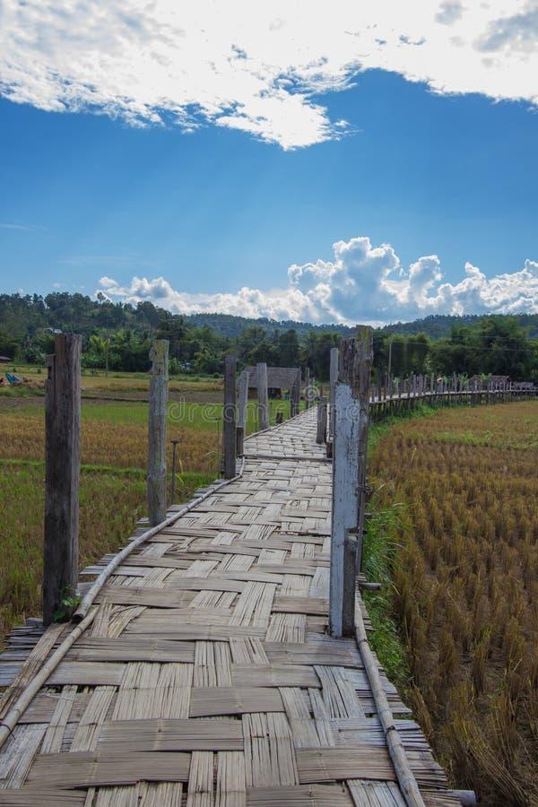 El Su Tong Pae Bridge, el puente de bambú de la fe a través del arroz coloca en la provincia de Mae Hong Son, Tailandia septentri foto de archivo