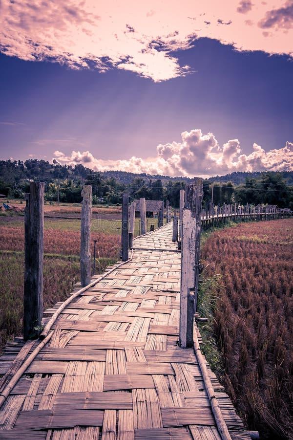 El Su Tong Pae Bridge, el puente de bambú de la fe a través del arroz coloca en la provincia de Mae Hong Son, Tailandia septentri imagen de archivo