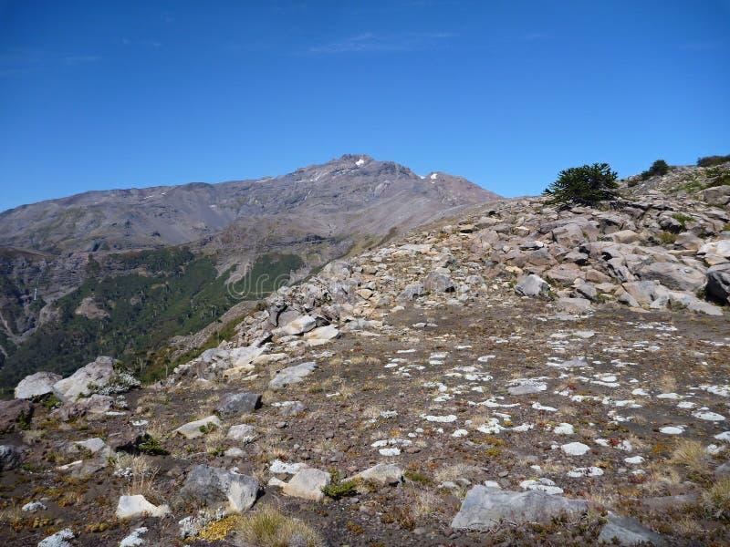 El subir al pico de Nevada del sierrra en araucarias de los las foto de archivo libre de regalías