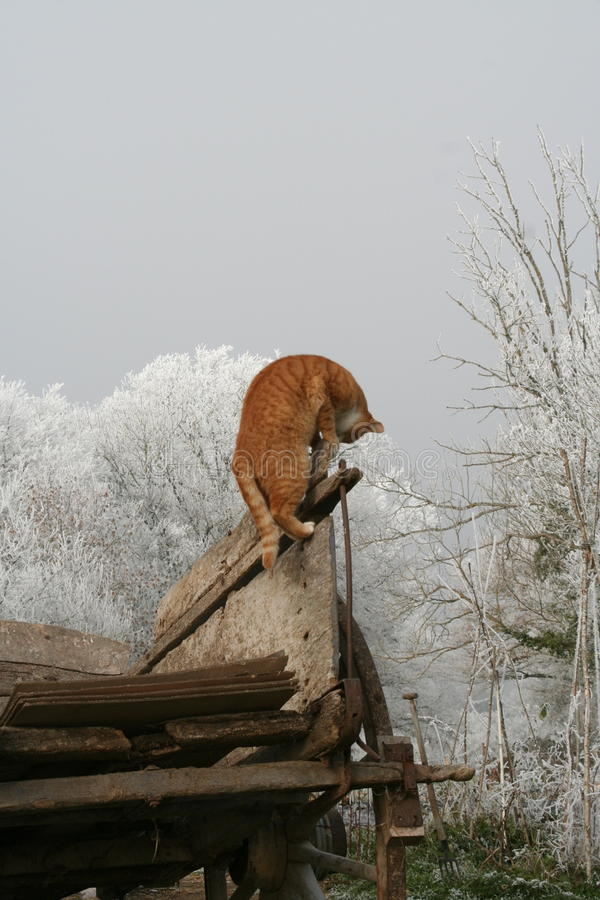 El subir del gato fotos de archivo