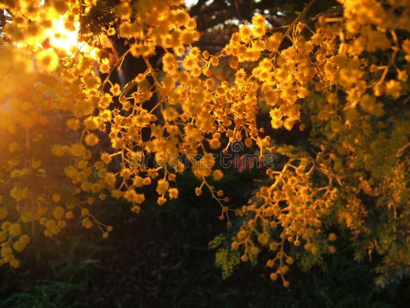 El Sun de oro imagen de archivo libre de regalías