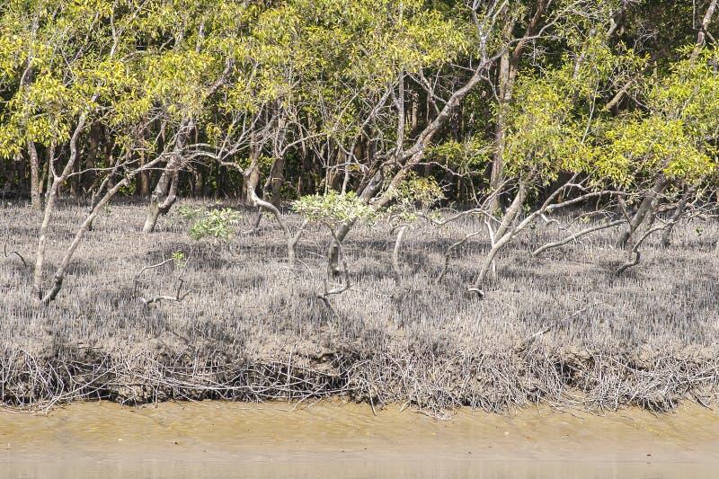 El Sundarbans fotos de archivo libres de regalías