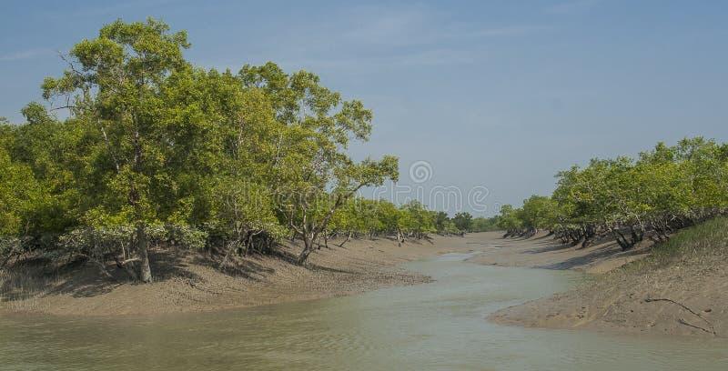 El Sundarbans imágenes de archivo libres de regalías