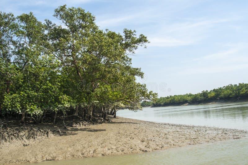 El Sundarbans fotografía de archivo libre de regalías