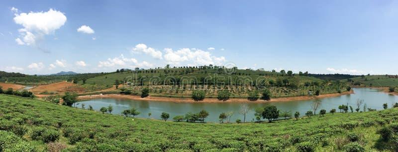 El té coloca con el lago en Bao Loc, Vietnam fotografía de archivo libre de regalías