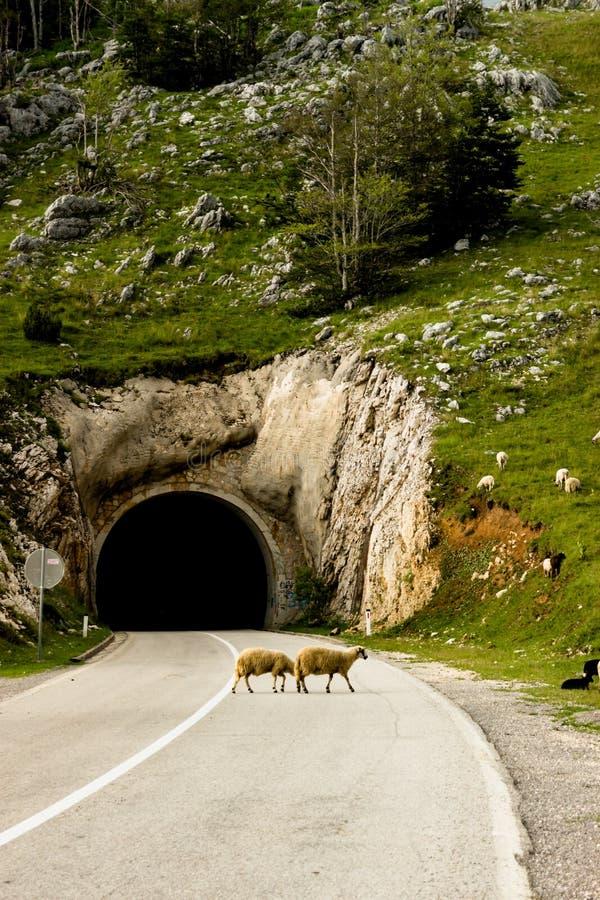 El túnel en el camino vacío en Montenegro foto de archivo libre de regalías