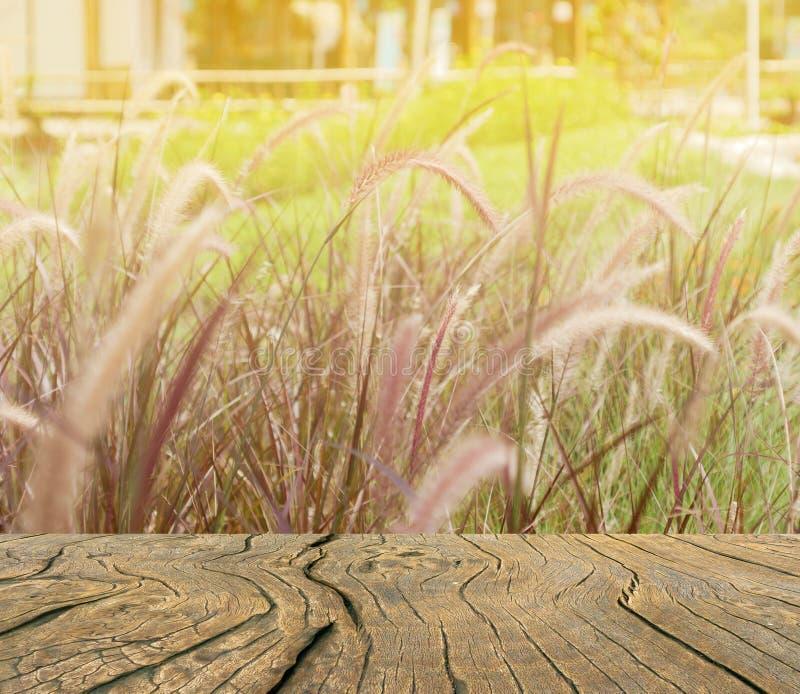 El tablón está en el prado con anaranjado claro fotos de archivo libres de regalías