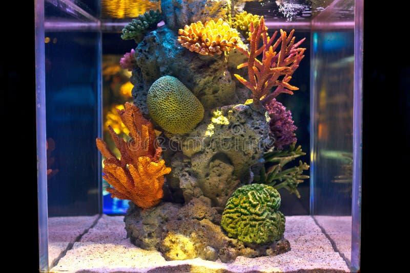 El tanque de peces de agua salada colorido foto de archivo