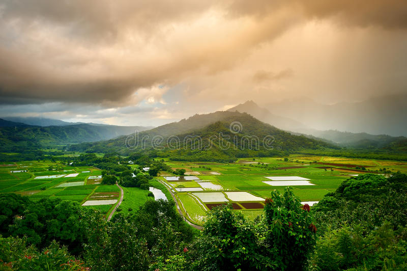 El taro coloca en el valle hermoso de Hanalei en la isla de Kauai, Hawaii fotos de archivo libres de regalías