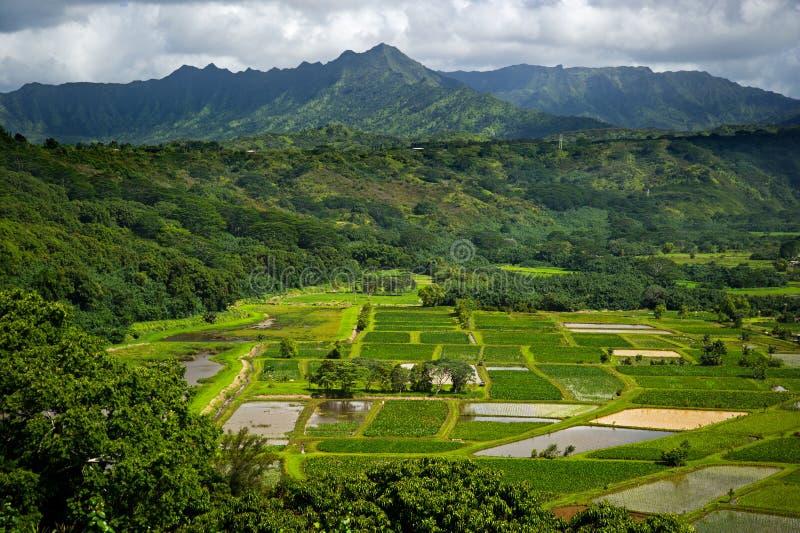 El taro del valle de Kauai Hanalei coloca escénico pasa por alto fotografía de archivo