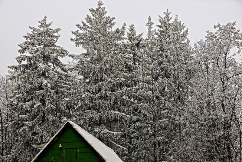 El tejado de la casa de madera verde al borde de un bosque del invierno imagenes de archivo