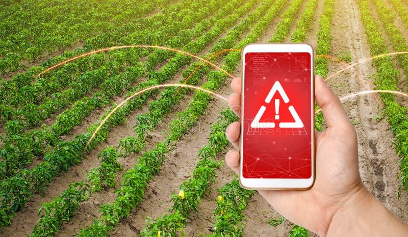 El teléfono advierte del peligro en el campo de la plantación de pimienta dulce Vigilancia y análisis de la presencia de producto imagen de archivo