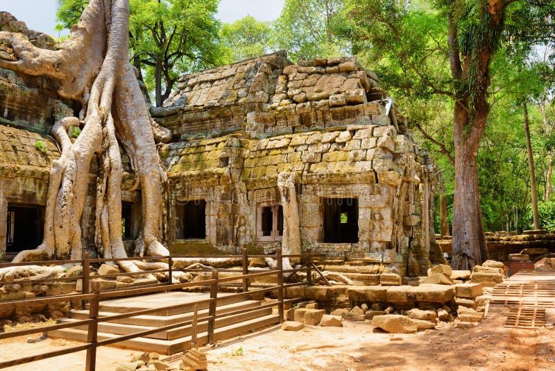 El templo de TA Prohm ha sido tragado por la selva en Angkor, Camboya imagenes de archivo