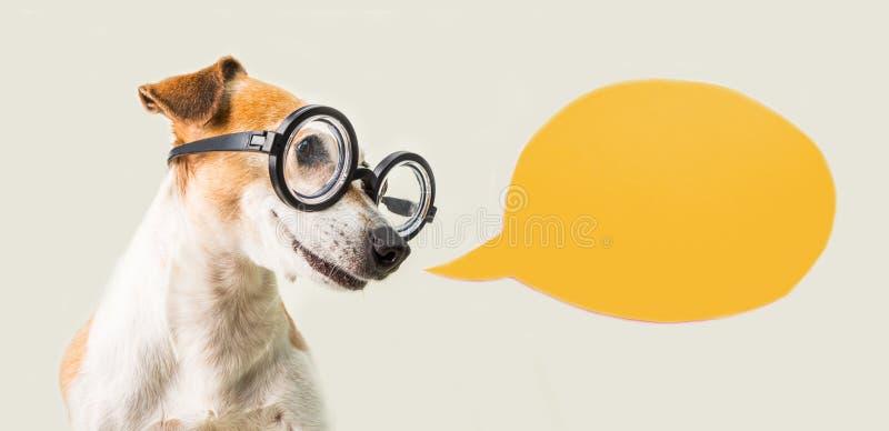 El terrier elegante de Russell del enchufe del perro del empollón en vidrios y el discurso burbujean Gris y naranja imágenes de archivo libres de regalías