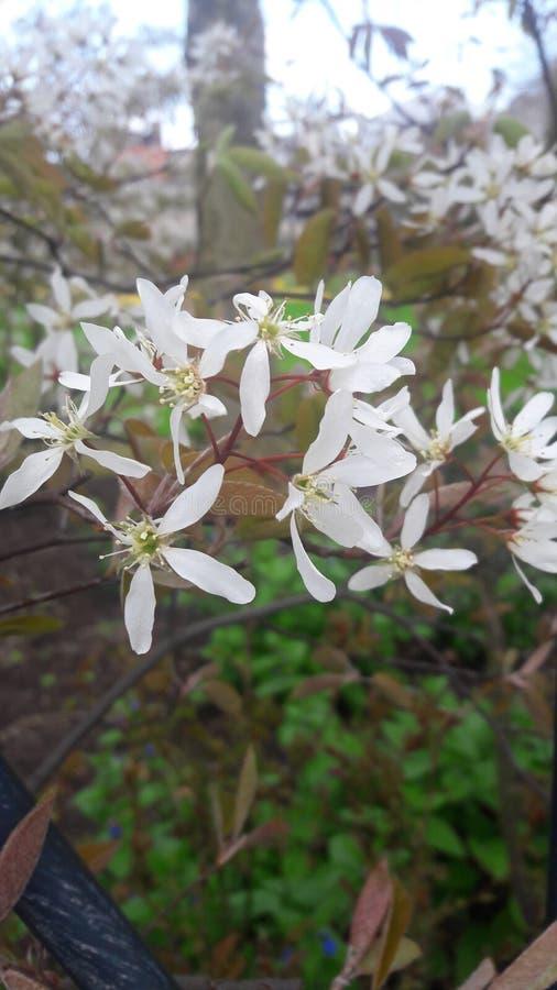 El tiempo de primavera… subió las hojas, fondo natural imágenes de archivo libres de regalías