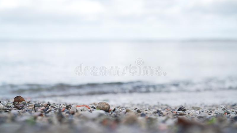 El tiro del primer del ángulo bajo de ondas trae la hoja del otoño en orilla de mar Báltico fotos de archivo libres de regalías