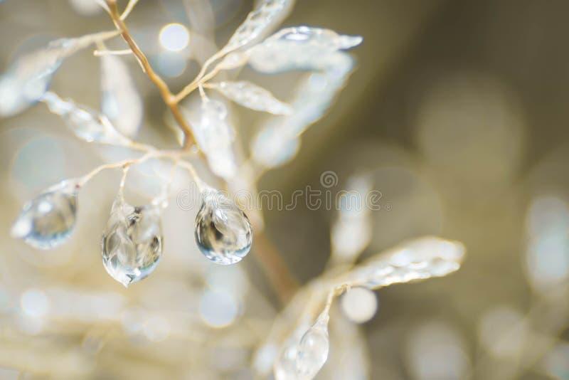El tiro macro de rocía o las gotitas que cuelgan en pequeñas hierbas blancas imagenes de archivo