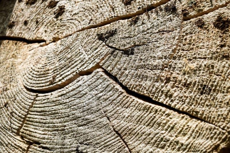 El tocón de árbol viejo que muestra los anillos de la edad alinea imagen de archivo libre de regalías