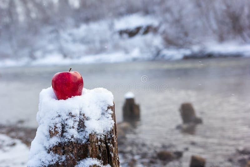 El tocón y la manzana roja contra el contexto de un invierno acumulan que no congele durante helada, nieve y la costa costa en el fotografía de archivo