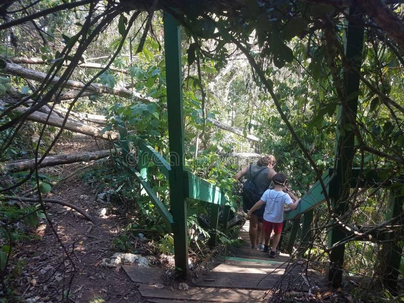 El tomar de la gente reduce para excavar en el bosque de Guajataca en Puerto Rico con los árboles caidos del huracán Irma y Maria imagenes de archivo