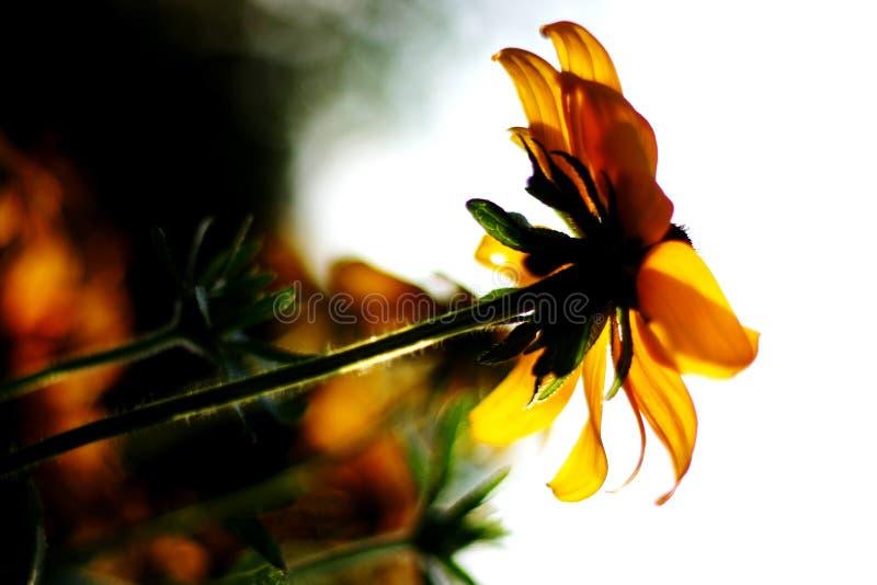 El Tomar El Sol Fotografía de archivo libre de regalías